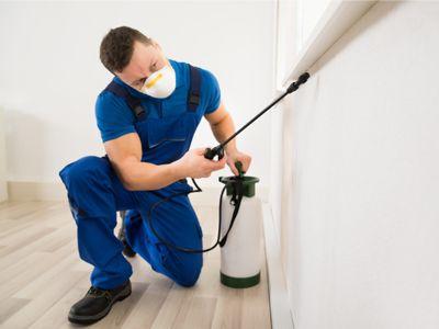 Pest Control Termite Inspections Fumigation Perth