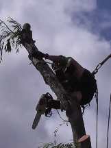 Tradie Cape Tree Service in Bull Creek WA