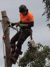 Tradie MPS Tree Services in Morley WA
