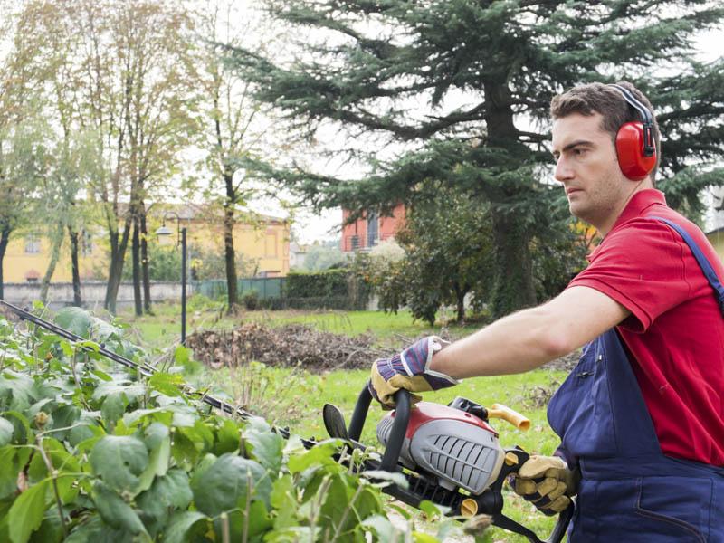 Gardening garden services for Local gardening services