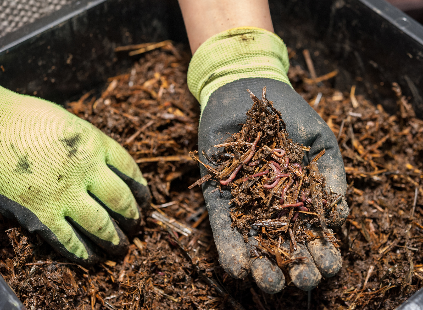 Image Result For How To Start A Worm Garden