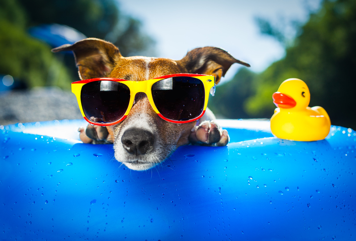 Ways to keep your pets cool in summer