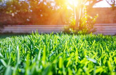What types of lawn are best for Perth's climate?