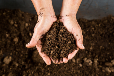 Top tips for improving the quality of your soil