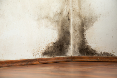 Top tips for removing and preventing mould in your home