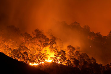 Is your home bushfire ready?