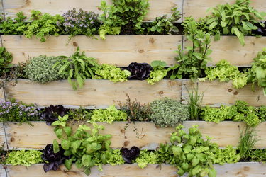 Grow up: why a vertical garden could be the answer for you