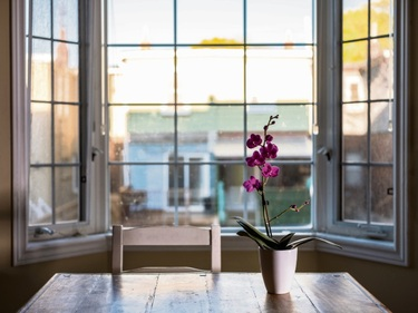 Top tips for growing a moth orchid