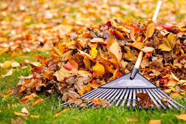 Four easy steps to autumn gardening