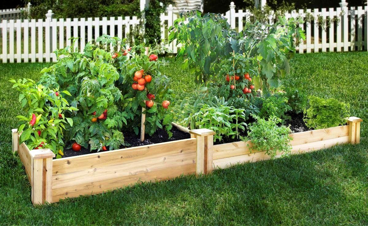 Vegetable Garden Inspiration Gardening Looklocalwa
